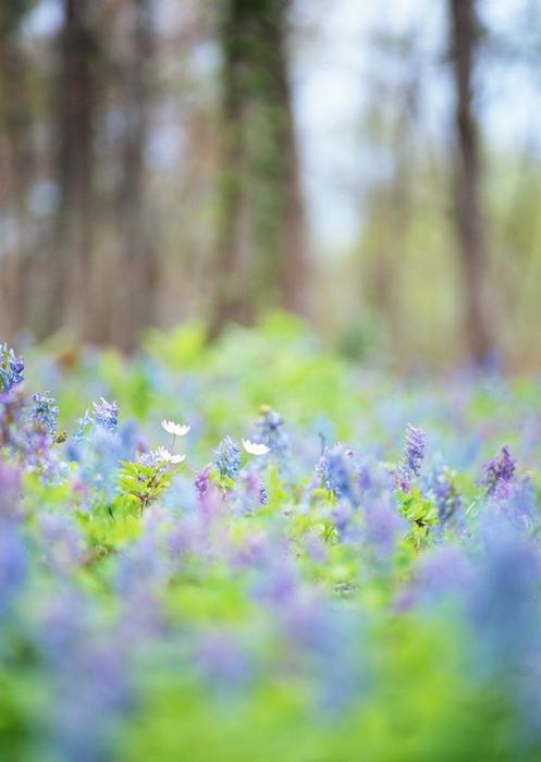 Ванильные фотографии цветов от Sozaijiten 19 (497x700, 292Kb)