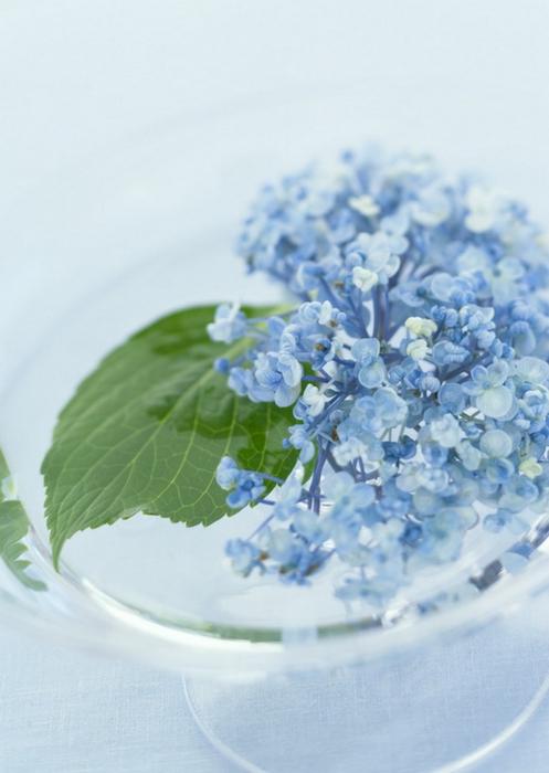 Ванильные фотографии цветов от Sozaijiten 21 (497x700, 254Kb)