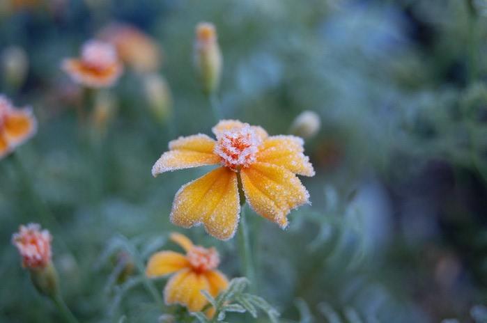 Ванильные фотографии цветов от Sozaijiten 31 (700x464, 49Kb)