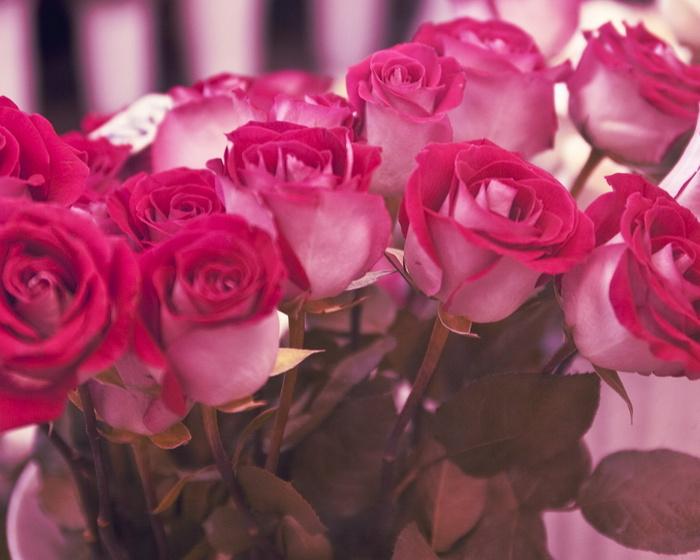 розы (700x560, 122Kb)