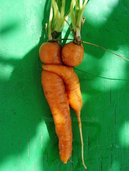морковка (427x565, 107Kb)