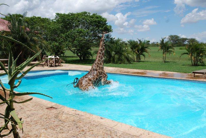 жираф фото 1 (700x468, 84Kb)