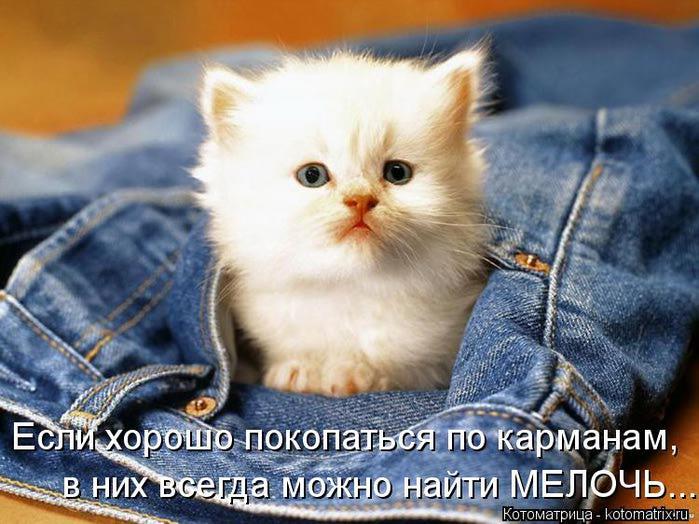 Кот в кармане животные картинки и обои для рабочего стола.