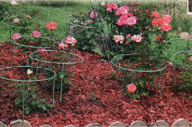 Удобрение для плетистой розы своими руками