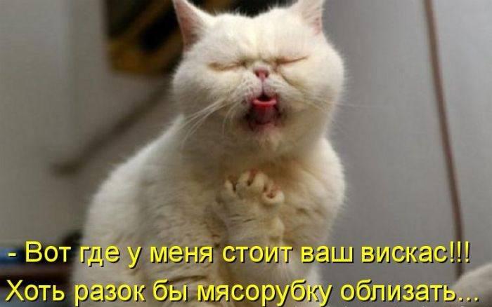 4080226_1310418053_1310124667_1309503600_kotomatrix_50 (700x438, 34Kb)