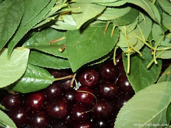 Что приготовить из вишневого сиропа