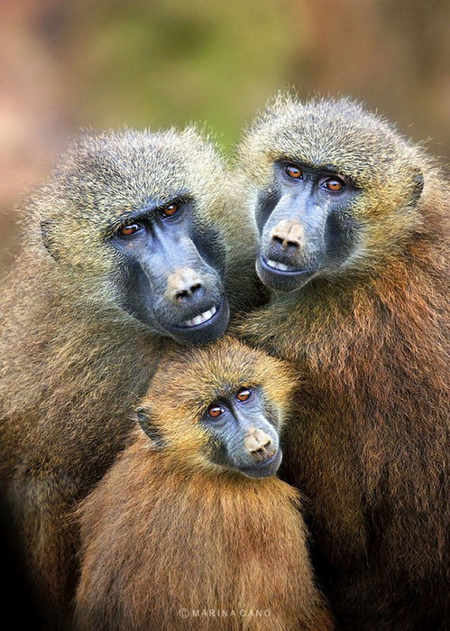прикольные фото животных Marina Cano (499x700, 132Kb)
