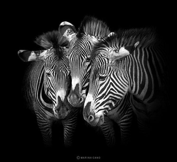 прикольные фото животных Marina Cano 4 (670x613, 67Kb)
