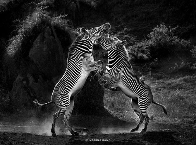 прикольные фото животных Marina Cano 8 (670x498, 85Kb)