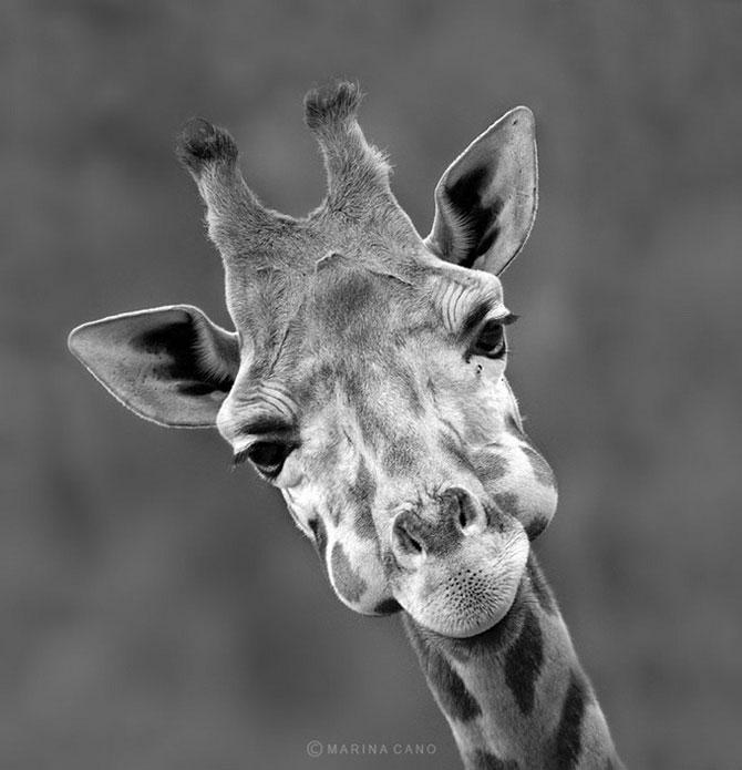 прикольные фото животных Marina Cano 12 (670x695, 59Kb)