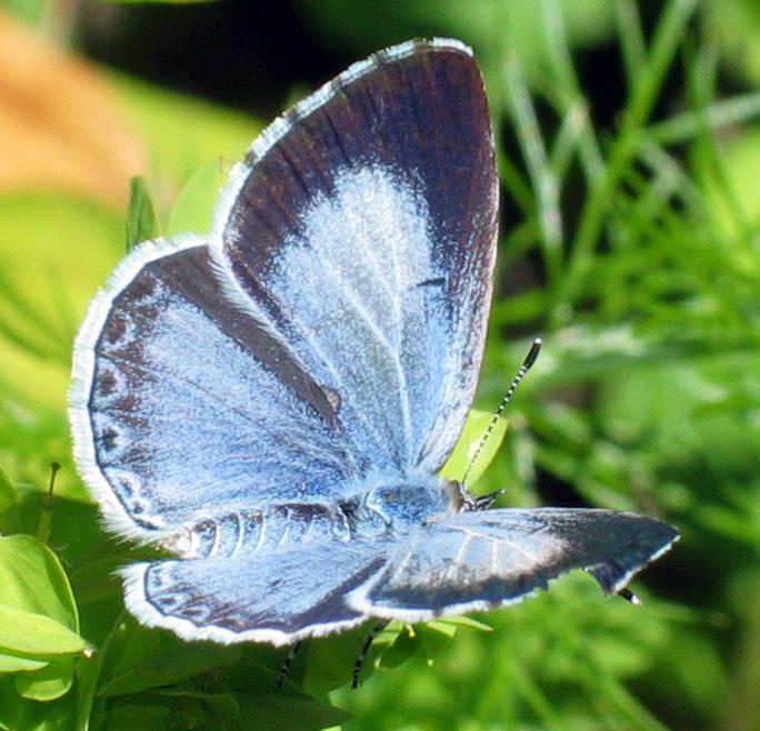 butterfly (684x658, 191Kb)