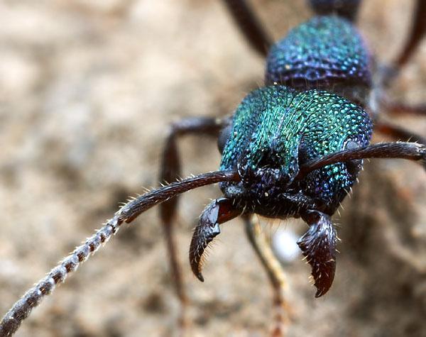 ant (600x475, 69Kb)