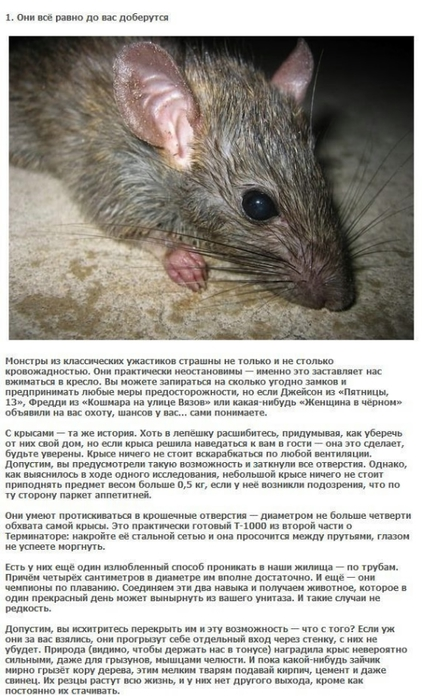rat_01 (422x700, 226Kb)