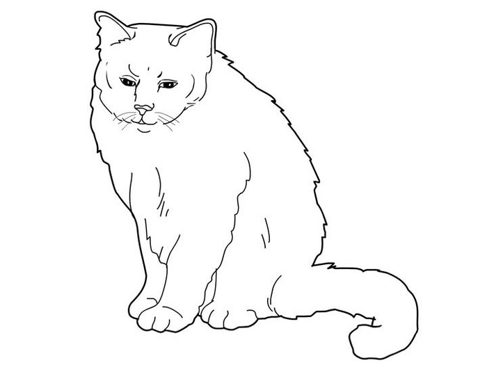 cats_coloring_pages_birman (700x525, 30Kb)