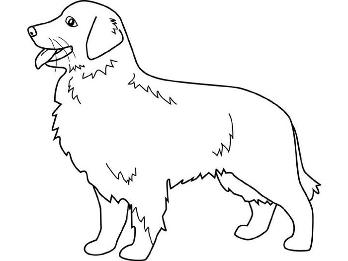 dogs_coloring_pages_golden-retriever (700x525, 38Kb)