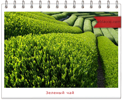 зеленый чай/3518263_shablon (434x352, 309Kb)