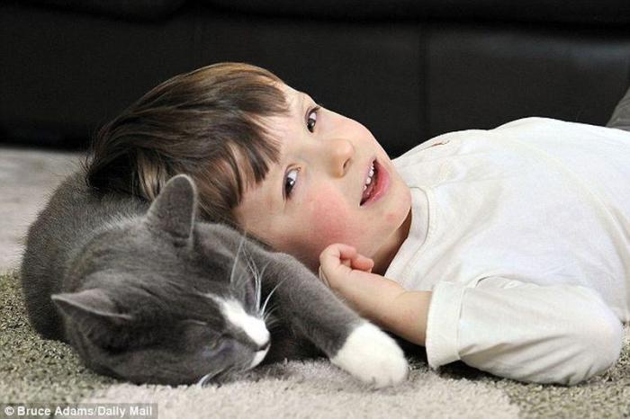 лечебные возможности кошек 3 (700x466, 42Kb)