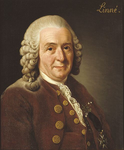 496px-Carl_von_Linné (496x599, 56Kb)