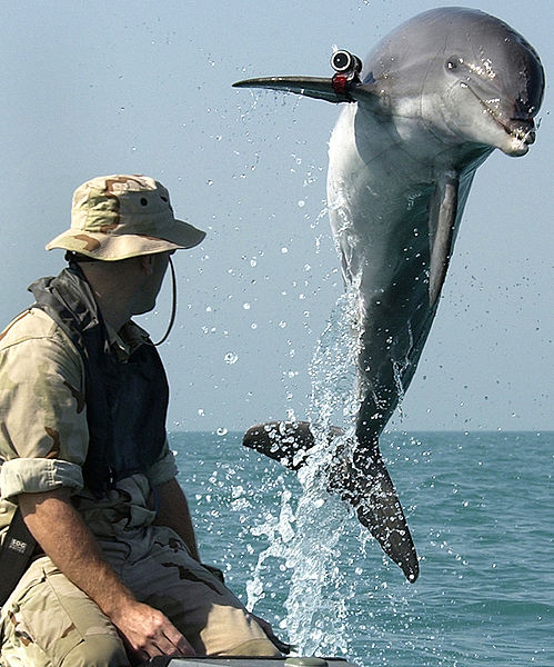 4761150_499pxNMMP_dolphin_with_locator (499x600, 84Kb)