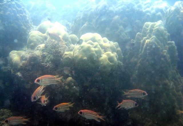 Сиамский залив, окрестности острова Самуи18 (640x441, 48Kb)