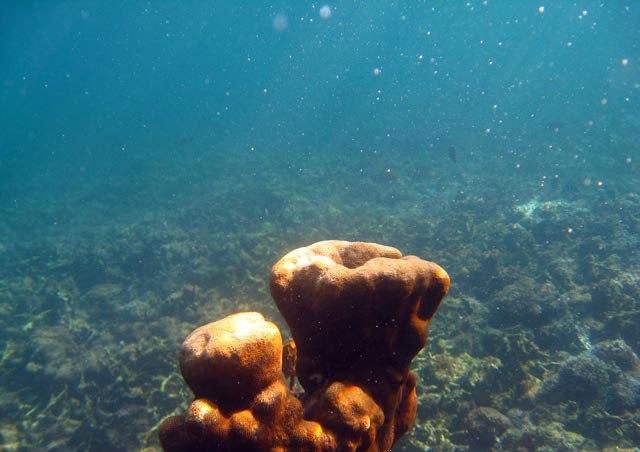 Анемоны на острове Ко Тао12 (640x452, 51Kb)