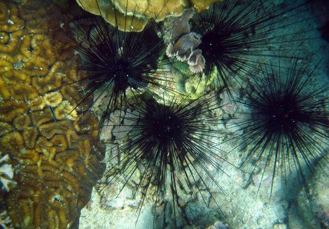 Анемоны на острове Ко Тао17 (640x446, 93Kb)