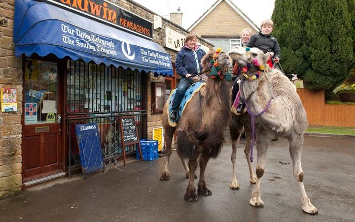 верблюды в городе фото (700x437, 121Kb)