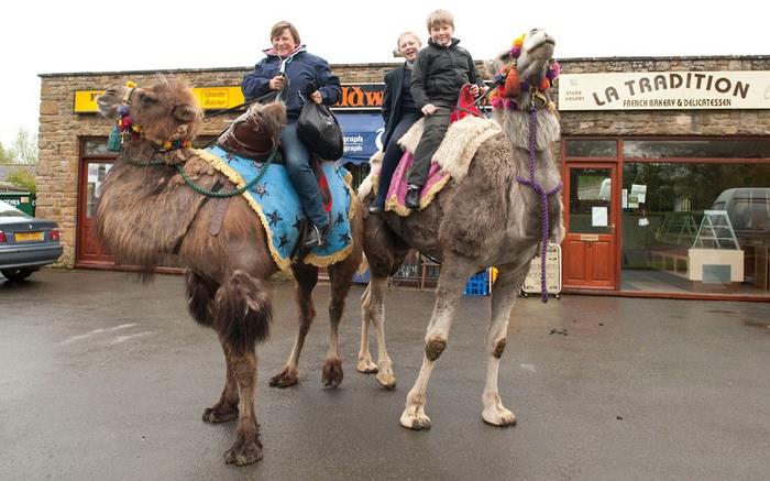 верблюды в городе фото 2 (700x437, 99Kb)