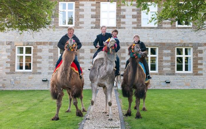 верблюды в городе фото 3 (700x437, 124Kb)