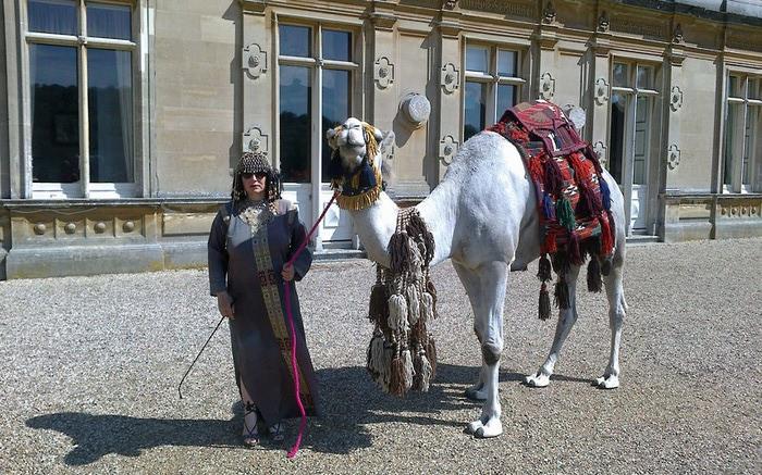 верблюды в городе фото 5 (700x437, 142Kb)
