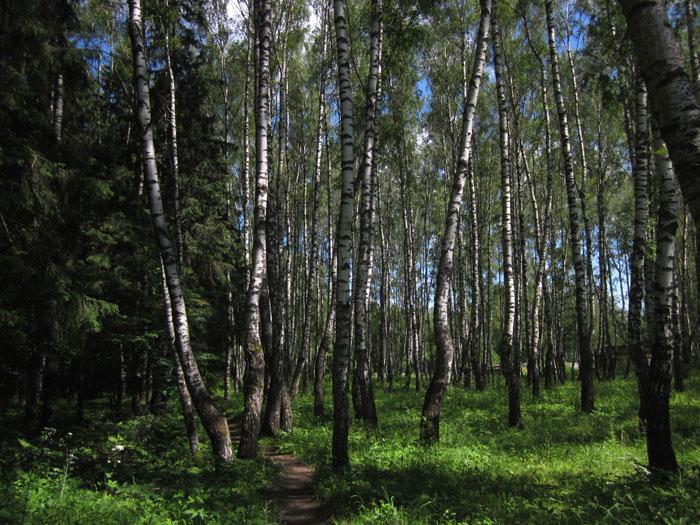 лес 03 (700x525, 175Kb)
