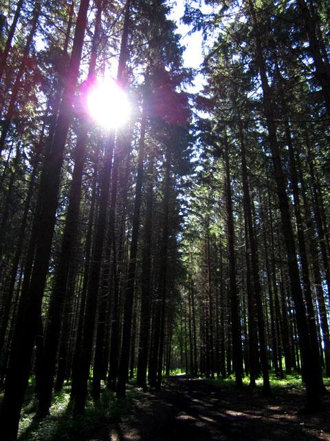 лес 05 (480x640, 153Kb)