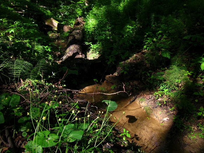 лес 12 (700x525, 188Kb)