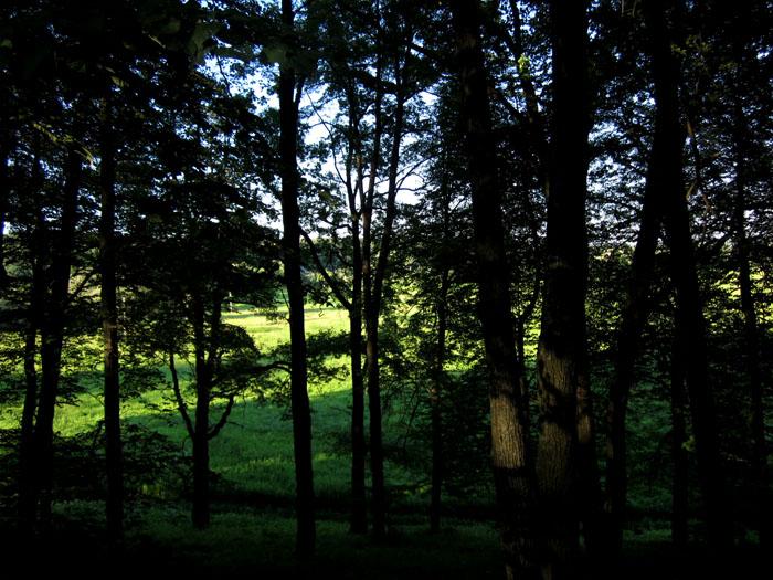 лес 17 (700x525, 166Kb)