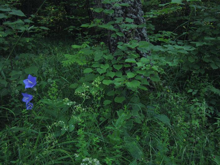 лес 18 (700x525, 159Kb)