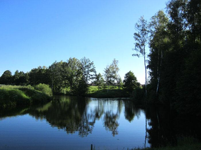 лес 26 (700x525, 103Kb)