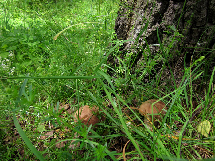 лес 28 (700x525, 219Kb)