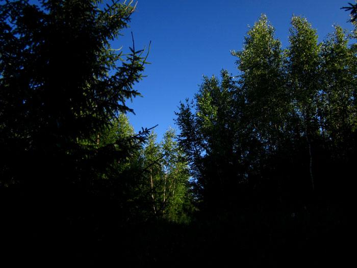 лес 35 (700x525, 109Kb)