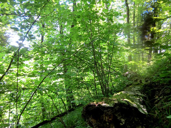 лес 44 (700x525, 243Kb)
