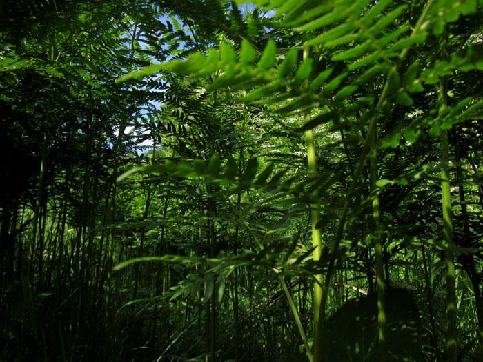 лес 50 (700x525, 174Kb)