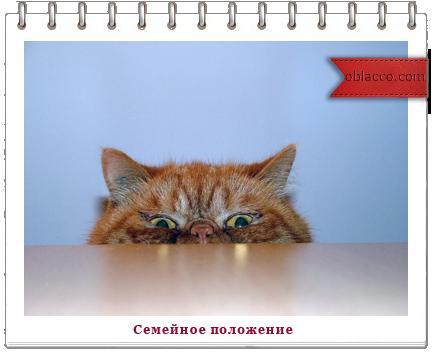 кот семья сон/3518263_polojenie_1_ (434x352, 189Kb)