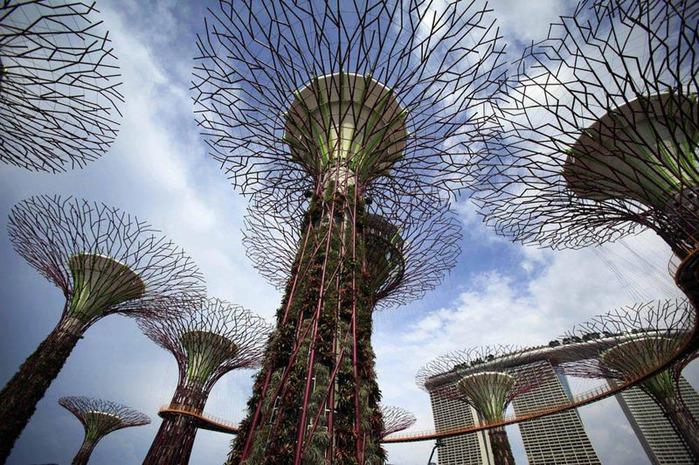 сады в сингапуре 4 (700x465, 188Kb)