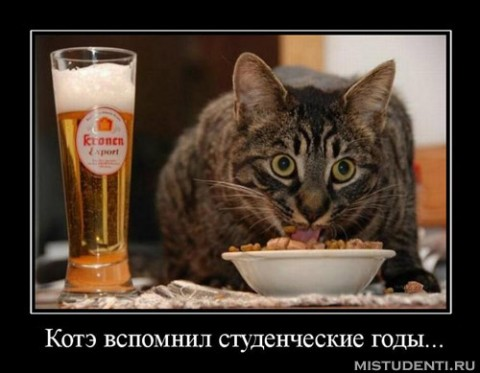 http://img0.liveinternet.ru/images/attach/c/5/88/635/88635692_4326608_big.jpg
