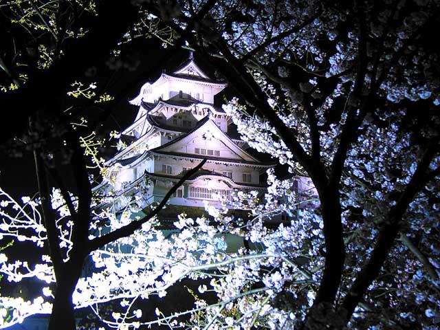 фото сакуры1 (640x480, 127Kb)