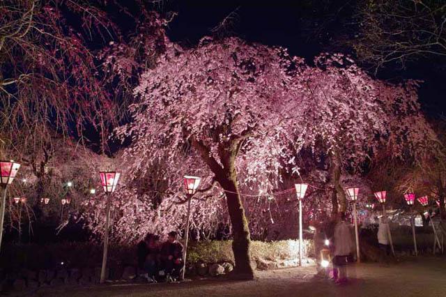 фото сакуры32 (640x426, 116Kb)