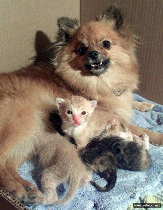 4833101_animals_114 (541x700, 76Kb)