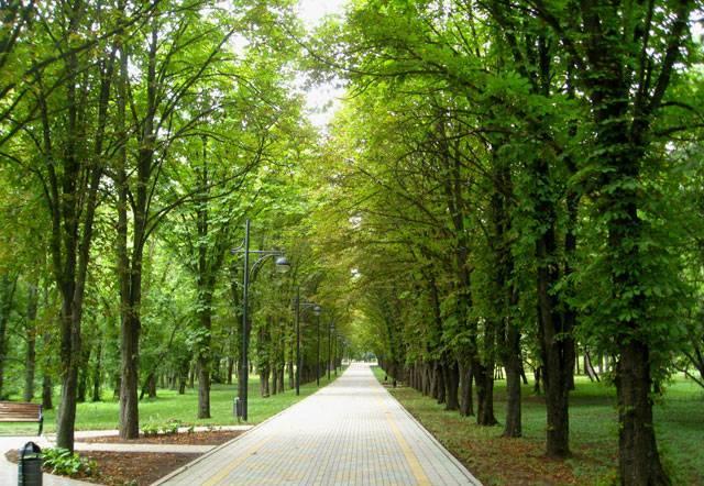 Ботанический сад, г. Краснодар2 (640x442, 74Kb)