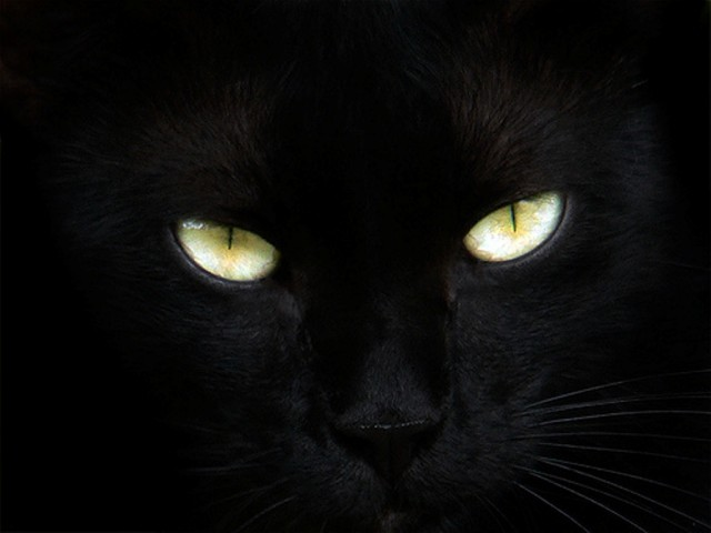 black cat eyes (640x480, 37Kb)
