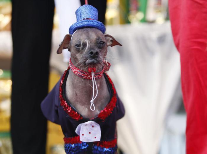 самые уродливые собаки фото 9 (700x519, 33Kb)