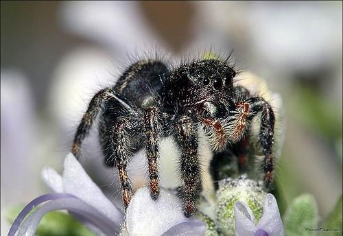 spidersB (500x344, 92Kb)